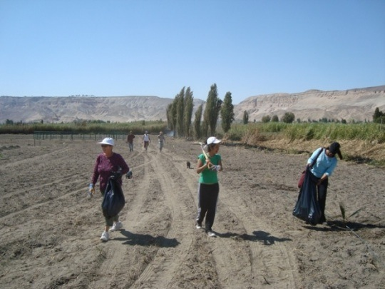 Planting Trees in Vitor, Peru